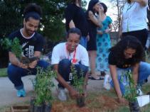 Plantando e Cultivando a Diversidade
